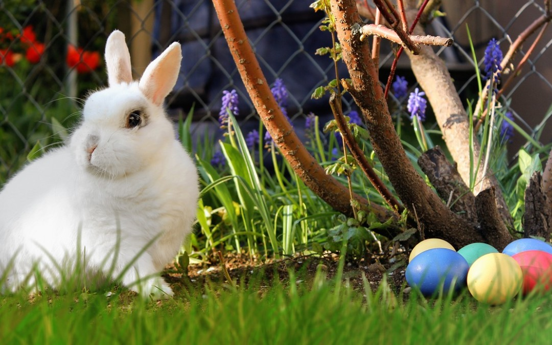 Fun Things to do in North Wales This Easter