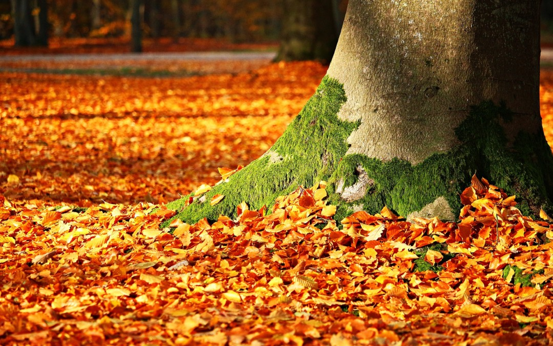 Family Friendly Autumn and Winter Events in North Wales